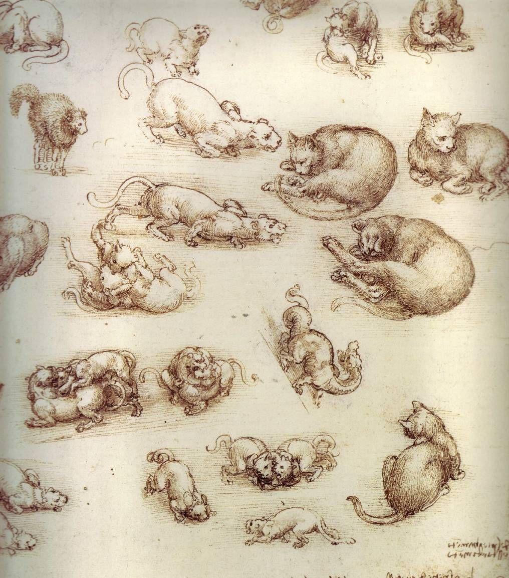 The drawings of Leonardo da Vinci - How to draw manga, comic ...