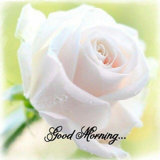Good Morning Good Morning Pinterest Flowers Beautiful Flowers