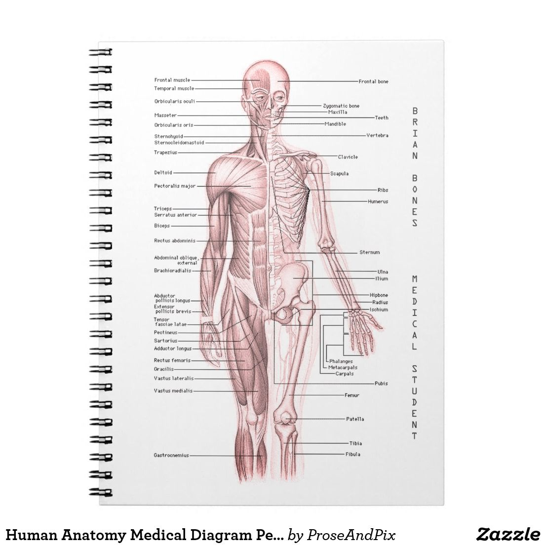 Human Anatomy Medical Diagram Personalized School Notebook