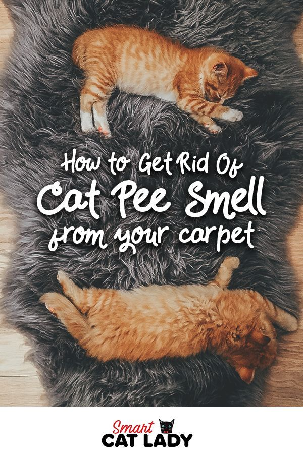 How to Get Rid Of Cat Pee Smell from Carpet in 2020 Cat