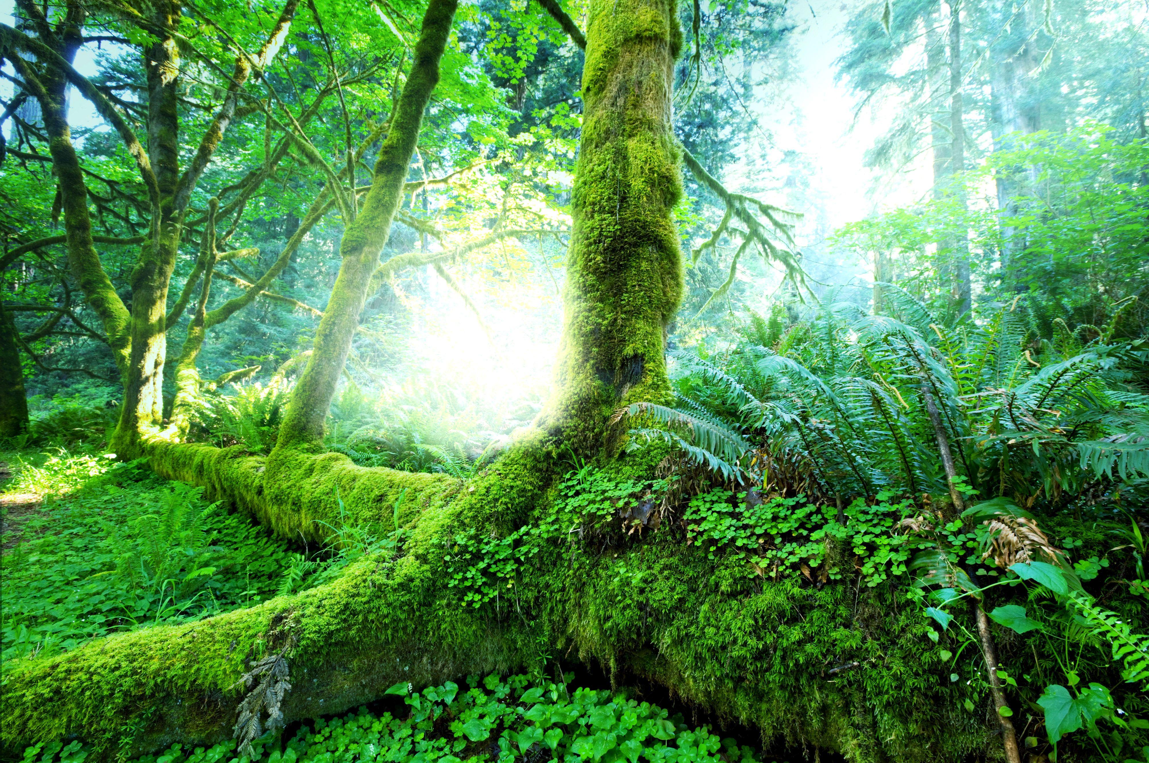 Earth Jungle Fern Moss Nature 4k Wallpaper Hdwallpaper Desktop Jungle Wallpaper Wallpaper Earth Jungle Images
