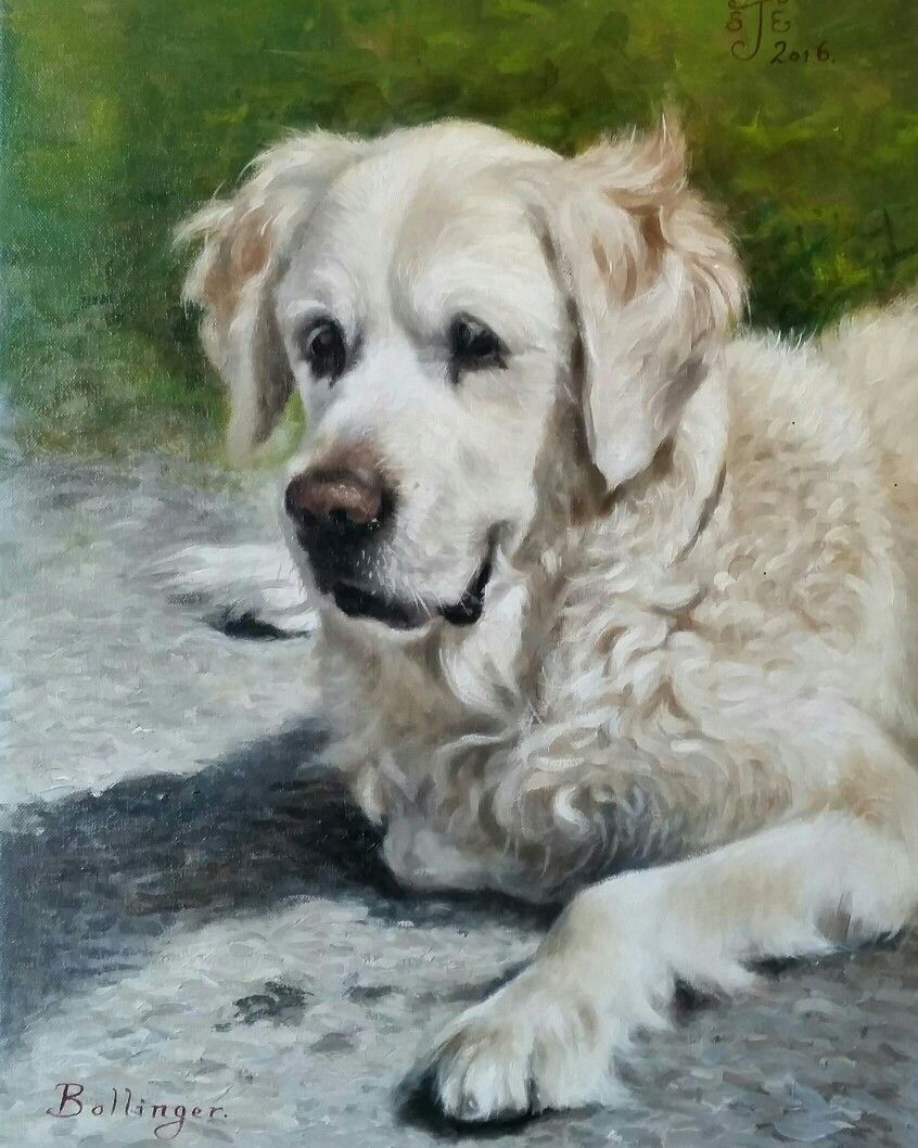 Golden Retriever Painting By Stephen J Edwards Www Personal Paw