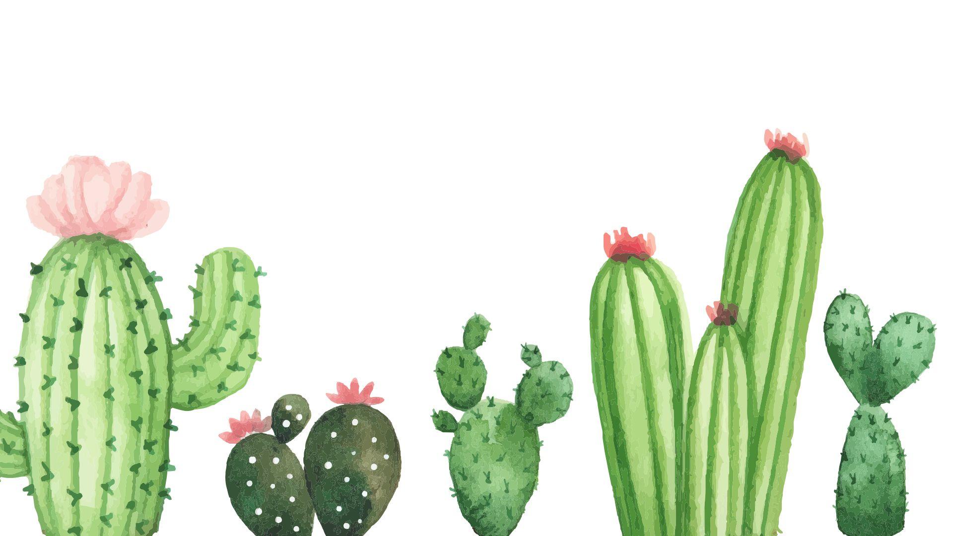 Cactus Wallpaper For Computer Watercolor Desktop Wallpaper Computer Wallpaper Desktop Wallpapers Plant Wallpaper