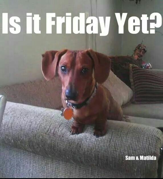 Is It Friday Yet Dogs Animals Friday