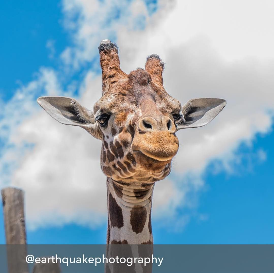 Repost from @earthquakephotography using @RepostRegramApp - Yesterday we took the kids to the zoo and I snapped a shot of this friendly fella!