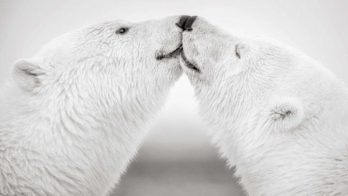 Site rencontre bear site de rencontre de femme celibataire gratuit femme landes