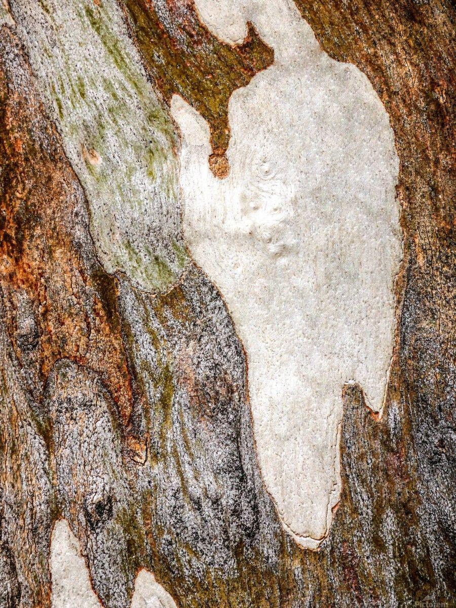 Ghost Gum Bark 5 Lexa Harpell Canvas Artwork
