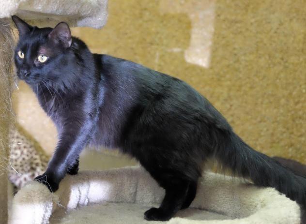 Adopt Chavez On Adoption Dog Cat Animals