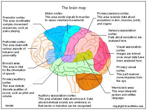 Diagram Brain Function Map - Information Of Wiring Diagram •