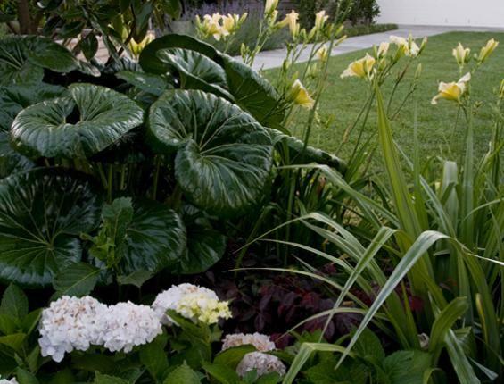 Jo Hamilton | The Garden Design Society of New Zealand ...