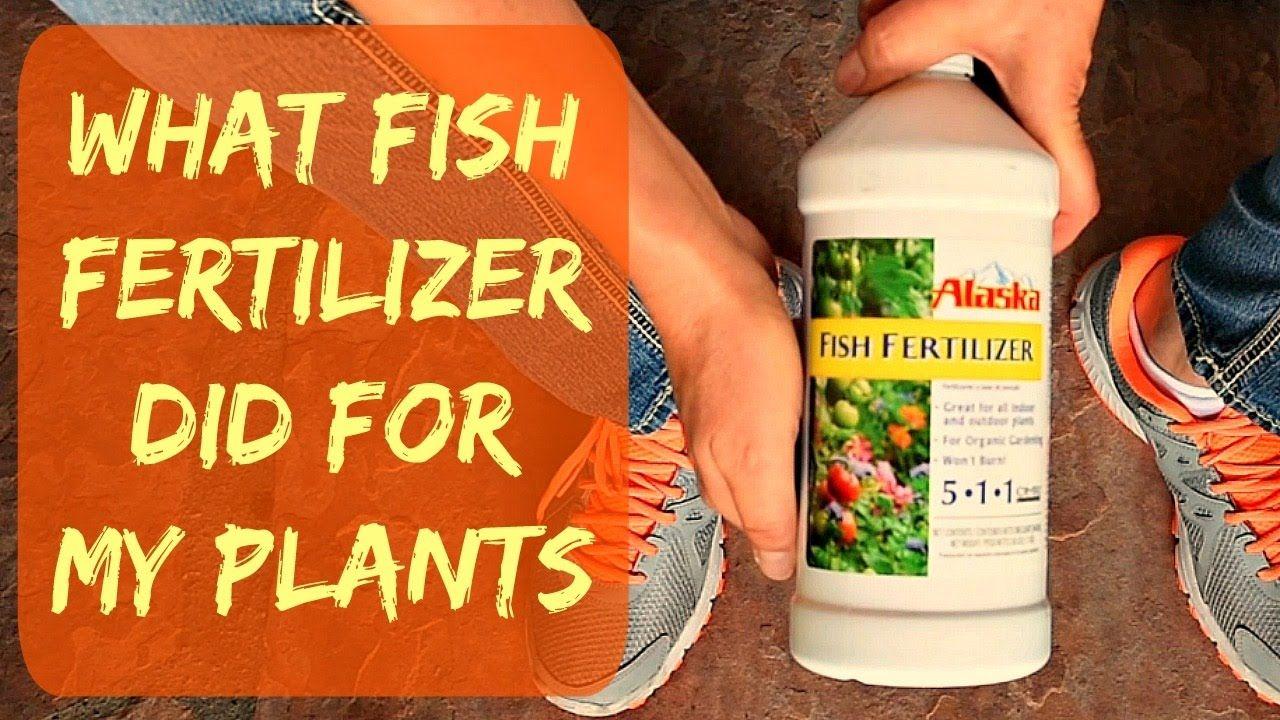 Update Alaska Liquid Organic Fish Fertilizer For Plants 400 x 300