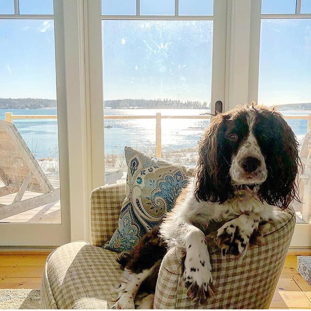If You Love Coastal Style Filled With Color Beautiful Patterns And Cute Dogs Then You Will Love Mollyinmaine Oh Cute Dogs Coastal Style Beautiful Patterns