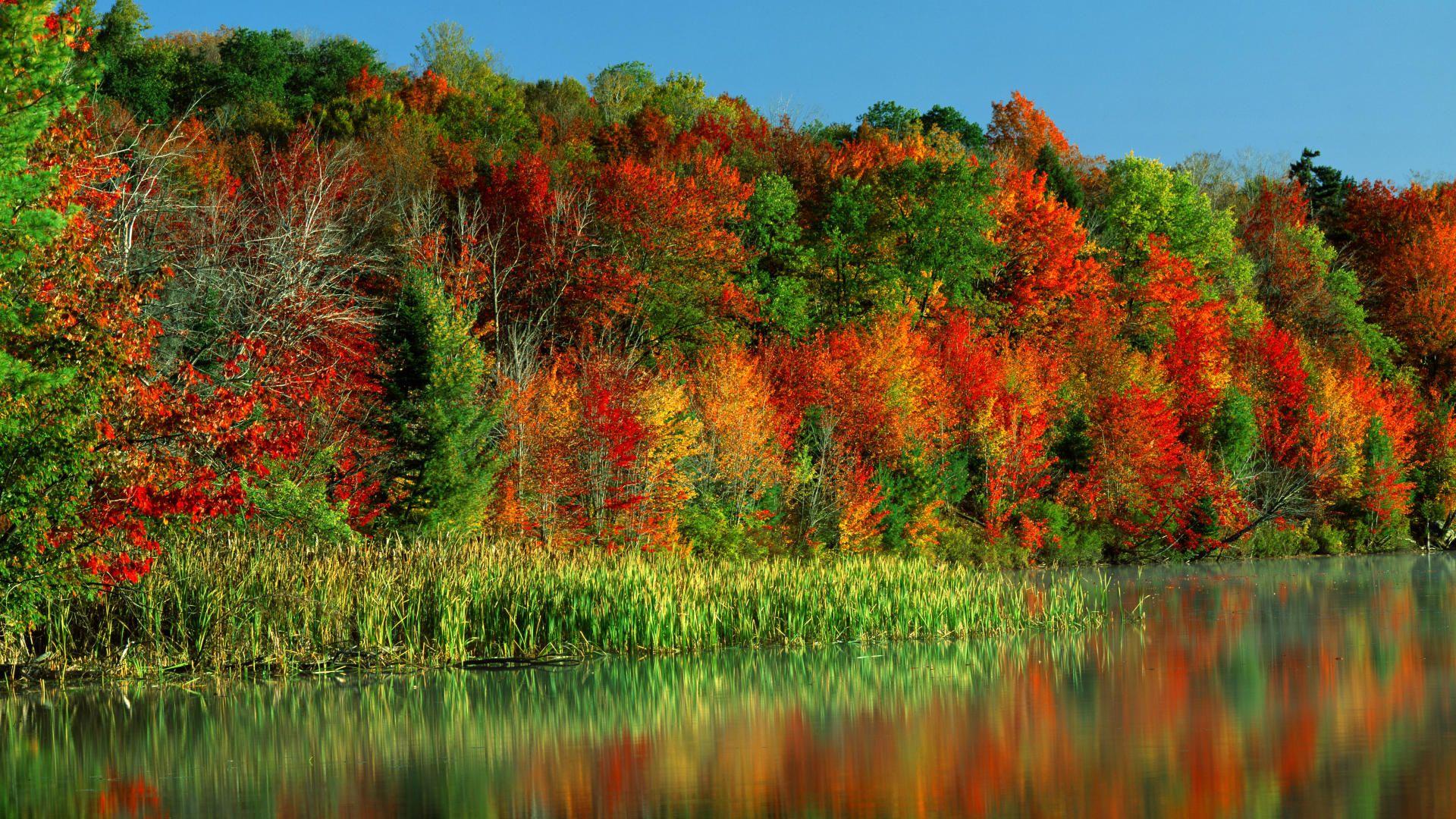 Morning Light, Horseshoe Lake, Adirondack Park and Preserve, New York - http://imashon.com/travel/morning-light-horseshoe-lake-adirondack-park-and-preserve-new-york.html