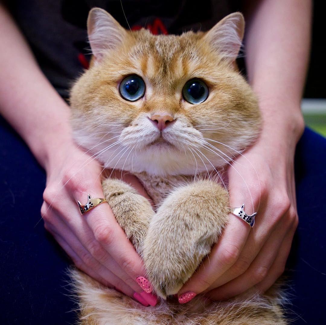 hosico_cat 猫, ねこ, たん