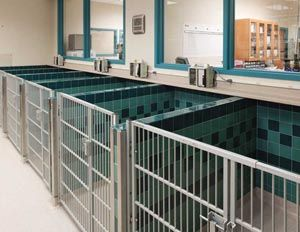 Recovery Ward At Red Bank Veterinary Hospital Runs Are Less Space Efficient Than Cages Since You Lose A Hospital Design Veterinary Hospital Veterinary Clinic