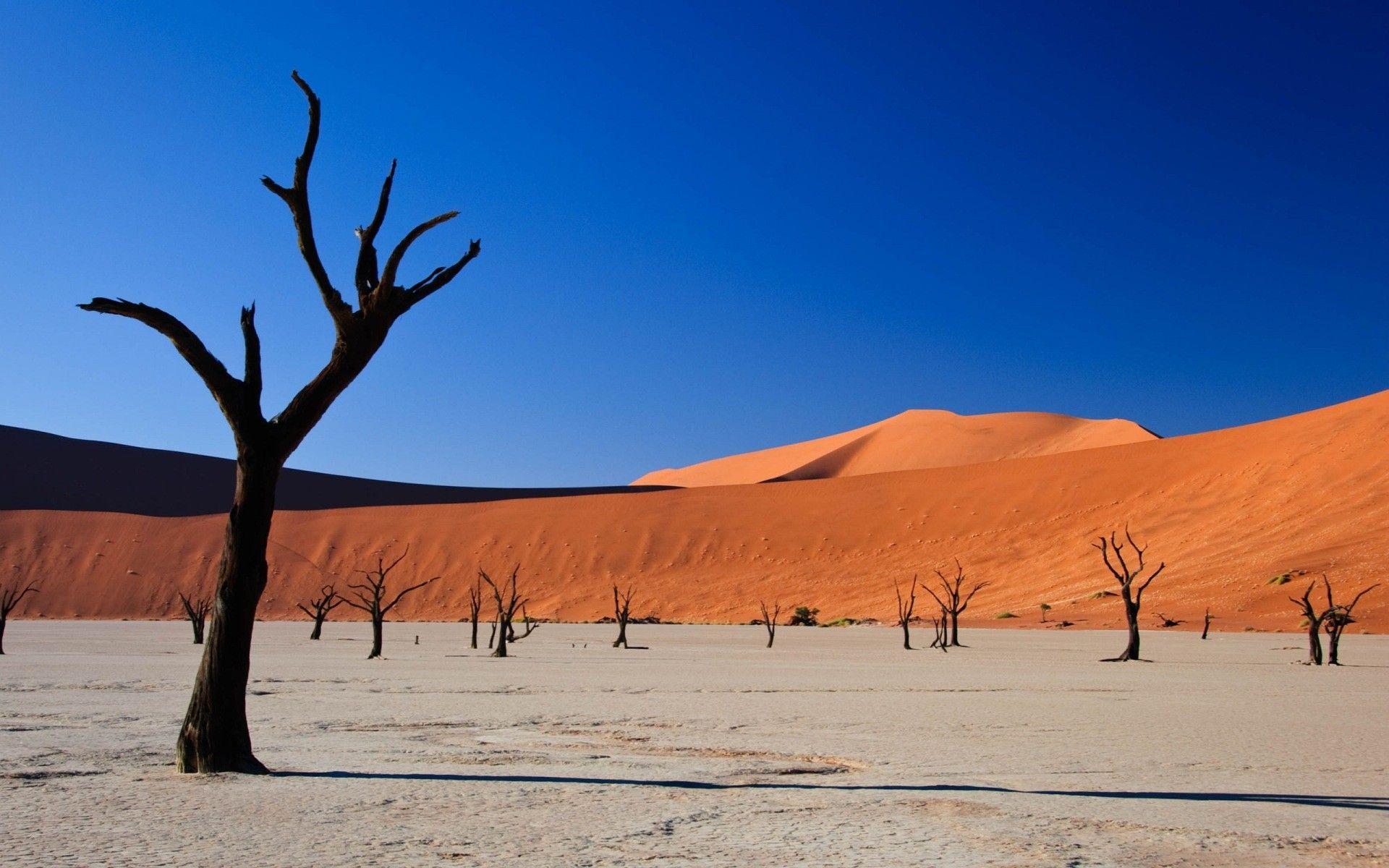 Image Result For Desert Landscape Gc Terrain Landscape