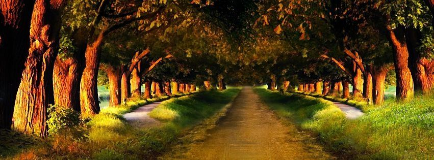 Facebook Cover Photo Woodland Road Archway   ФЕЙСБУК - Facebook ...