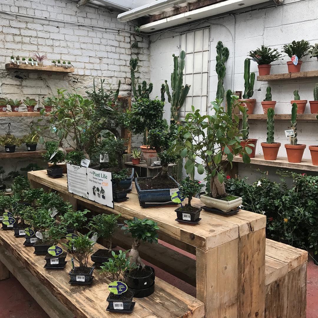 Our Cactus Succulent House Urban Plant Life Garden Centre Cork
