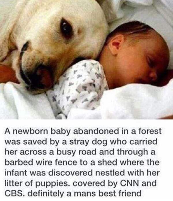 Shared Via Thunder Dungeon App Dogs Pinterest