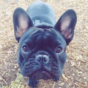 8 Ways Your Dog Displays Low Self Esteem French Bulldog Funny French Bulldog Cute French Bulldog