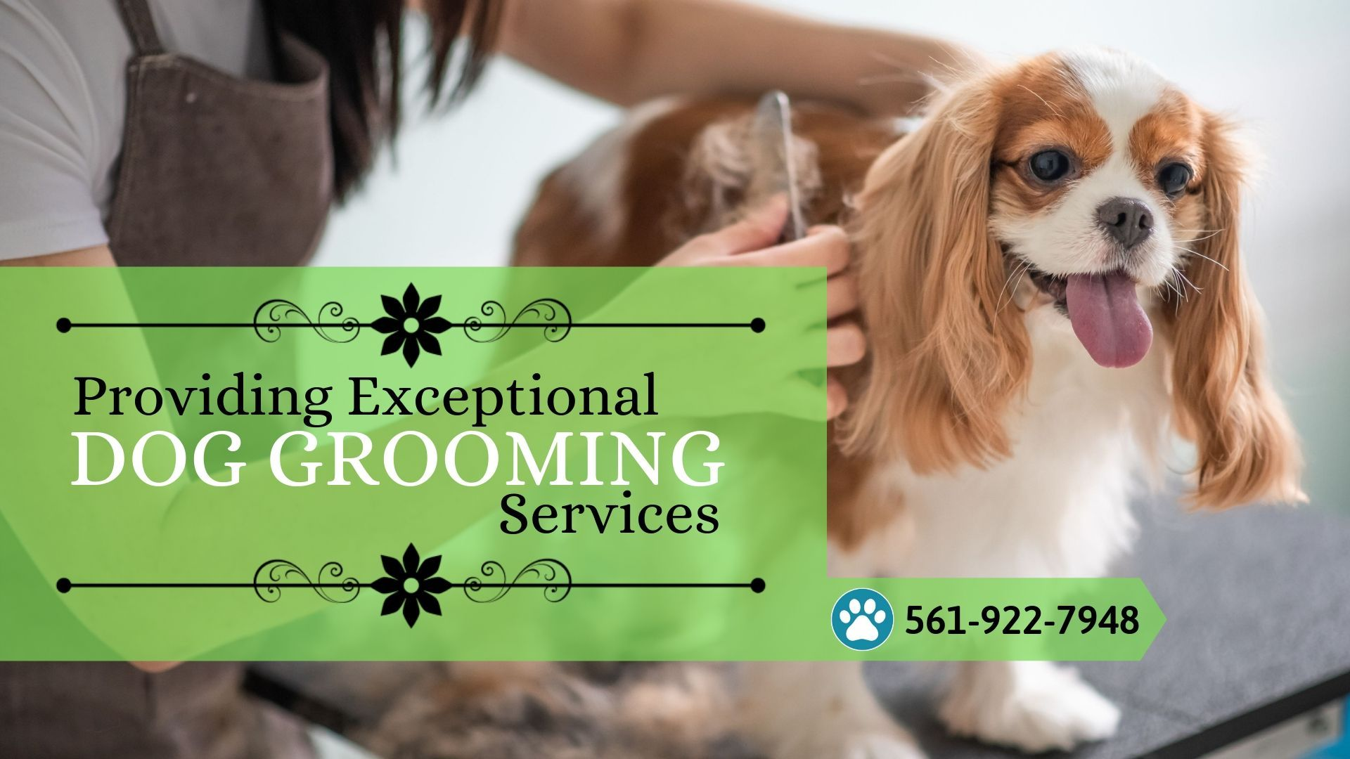 Dog Grooming Services Near Boca Raton Fl Dog Grooming Healthy