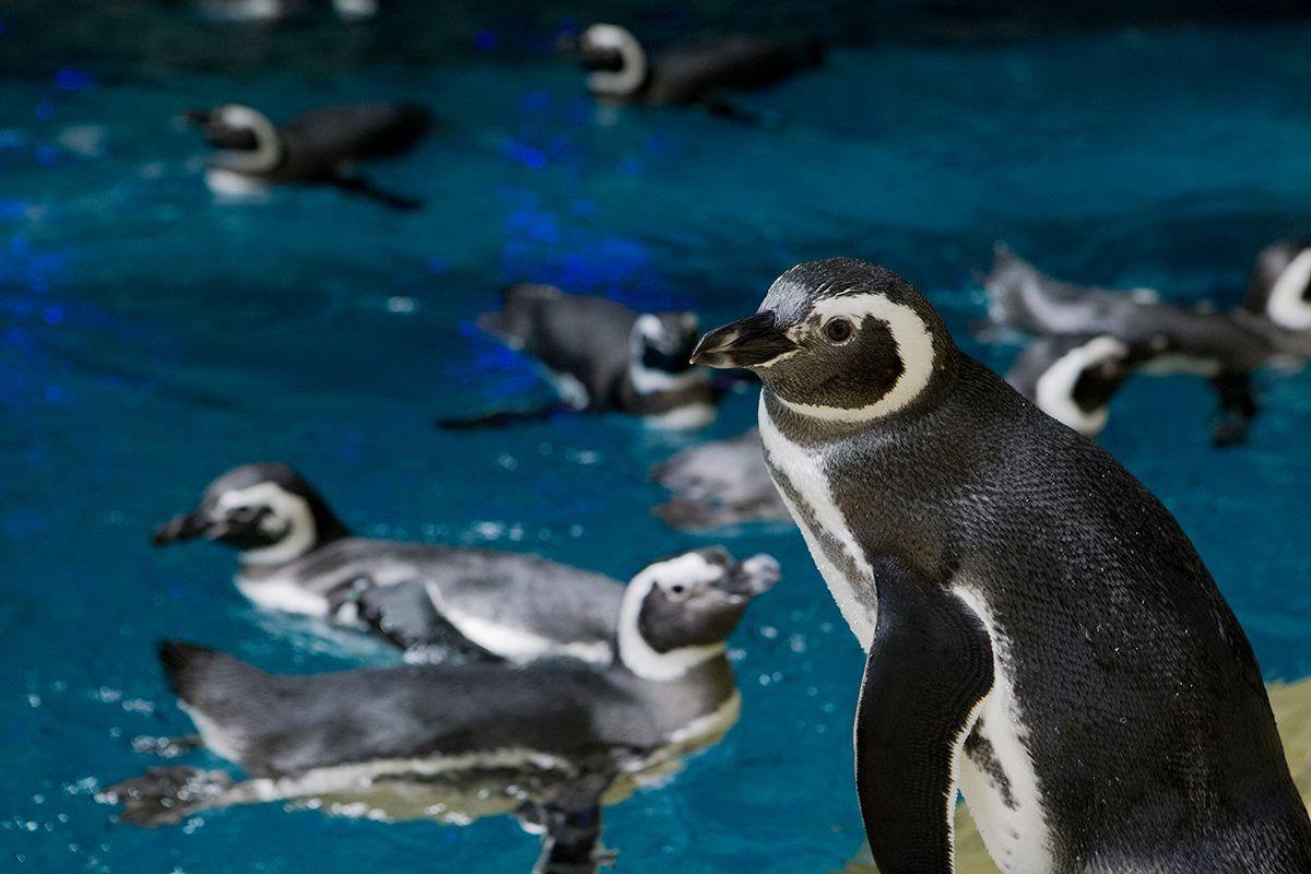 Pin by Andrew Mooney on Zoos & Aquariums Shedd aquarium