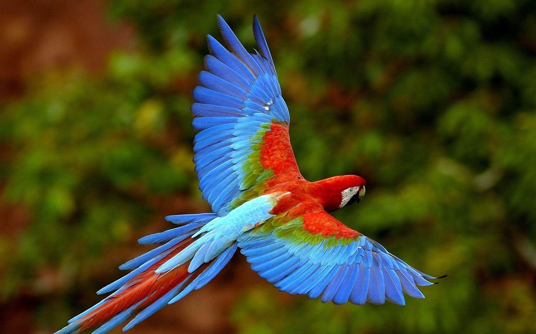 オウムの壁紙フォトアルバム 16 1440x900 カラフルな鳥類 オウム