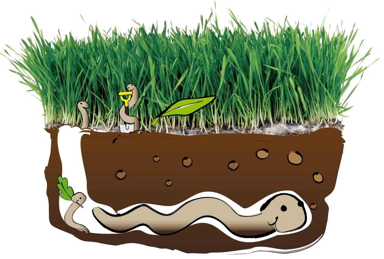 Le ver de terre commun laboureur grands et gros le - Dessin ver de terre ...