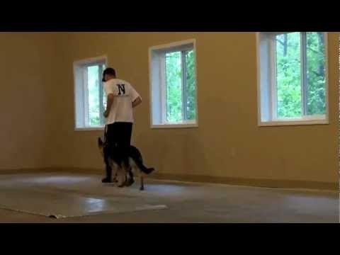 Duke German Shepherd Dog Training Boot Camp Video Minnesota