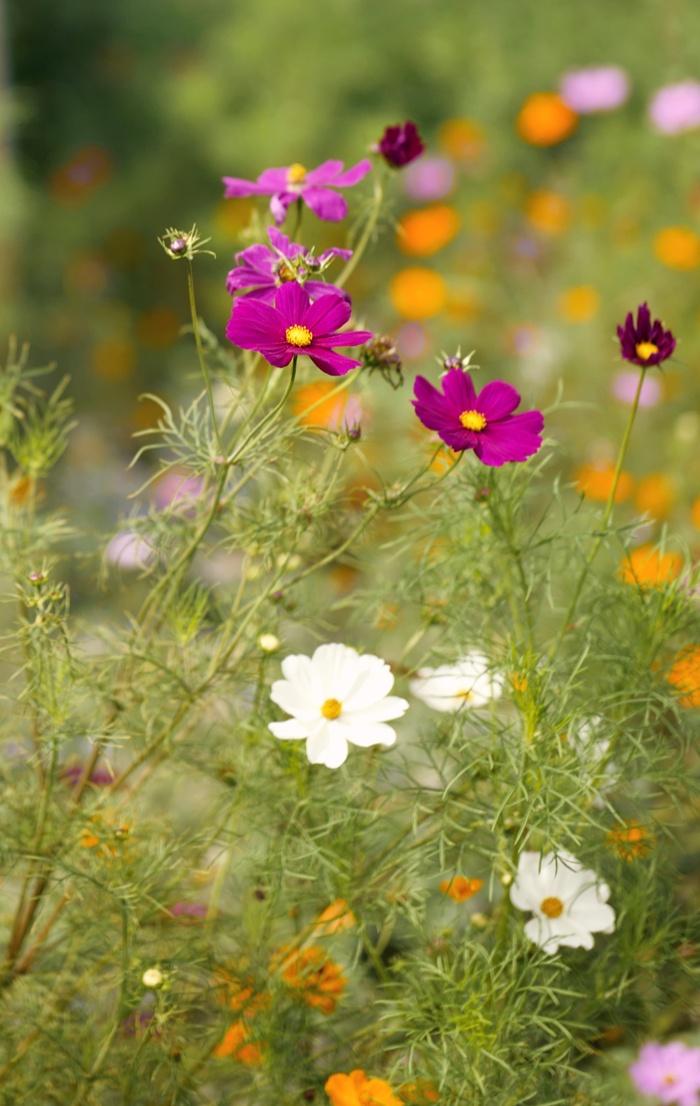 Pflanzen F Trockene Sonnige Standorte