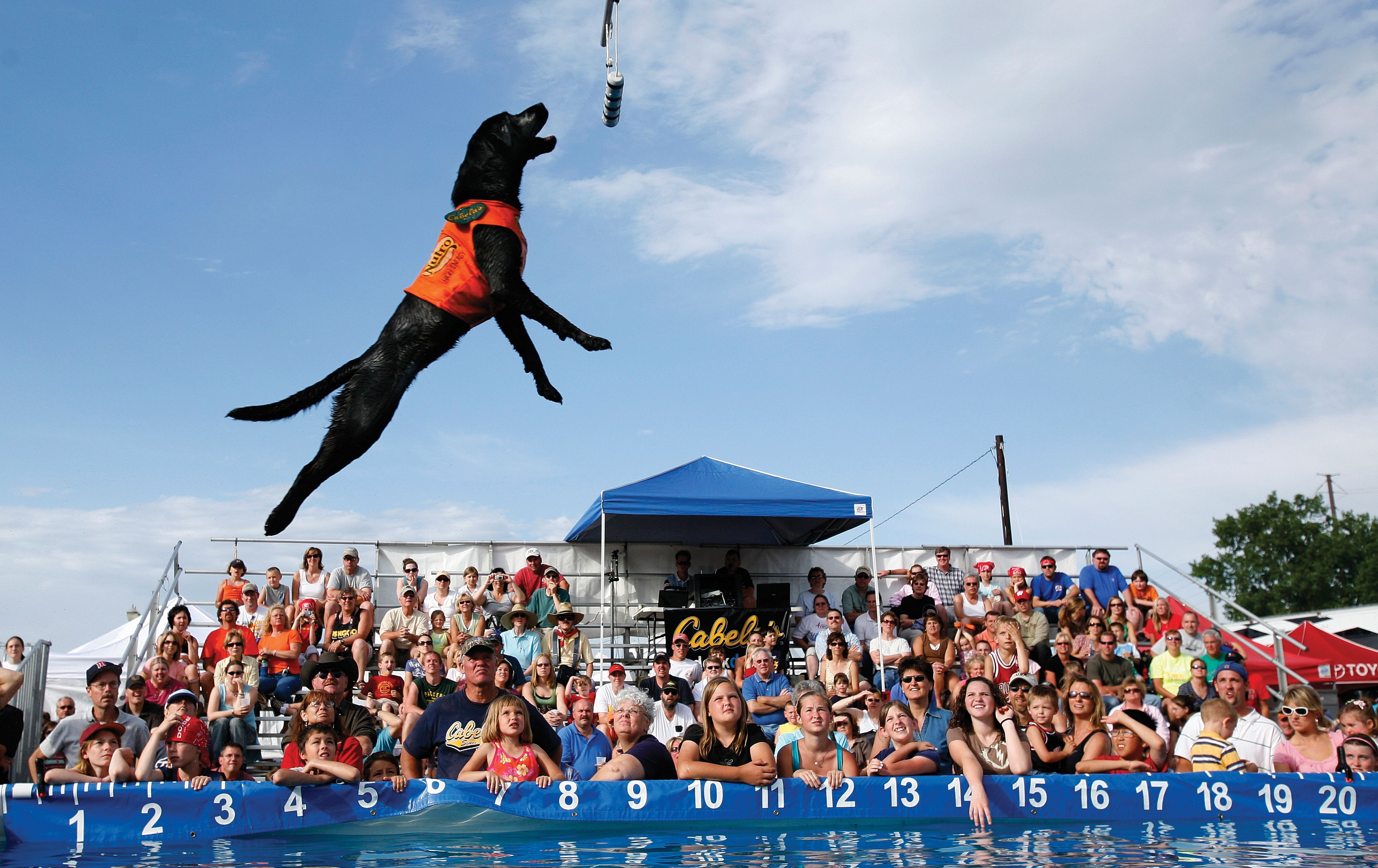 Dock Dogs At The America S River Festival With Images Dog
