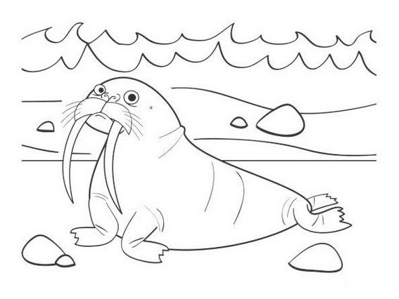Cute Walrus Coloring Pictures often Seen by Kids in the ...