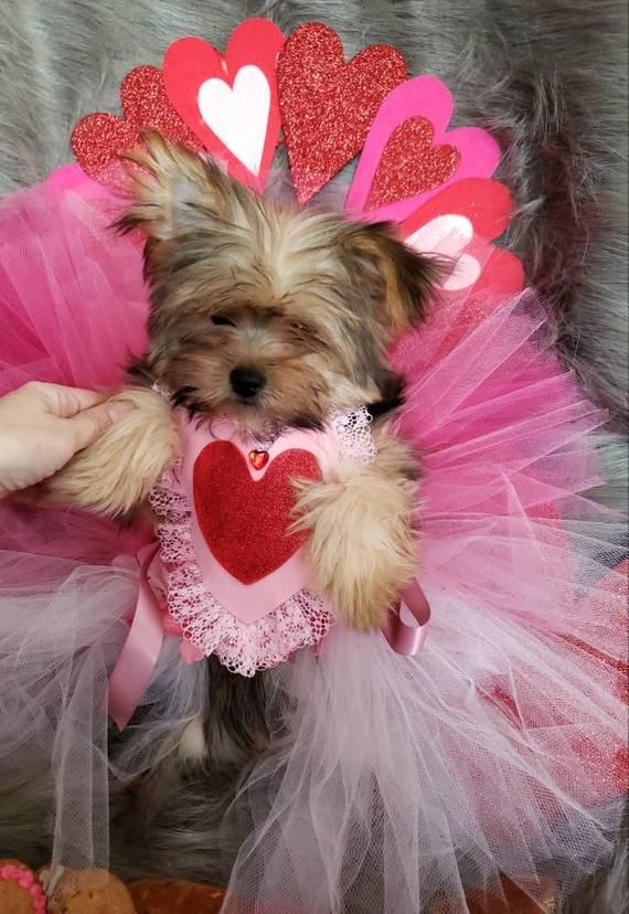 No Time To Sew Dog Pajamas Pjs For Dogs Valentine S Day Pajamas