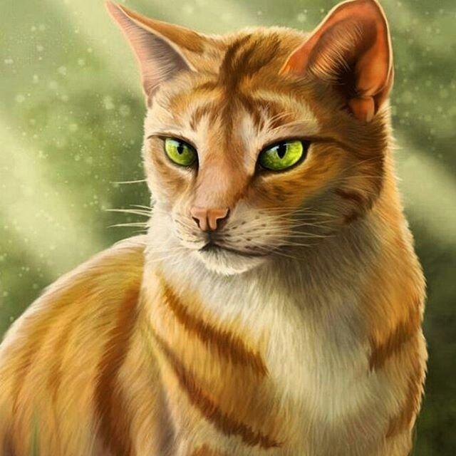 Feuerherz Warrior Cats