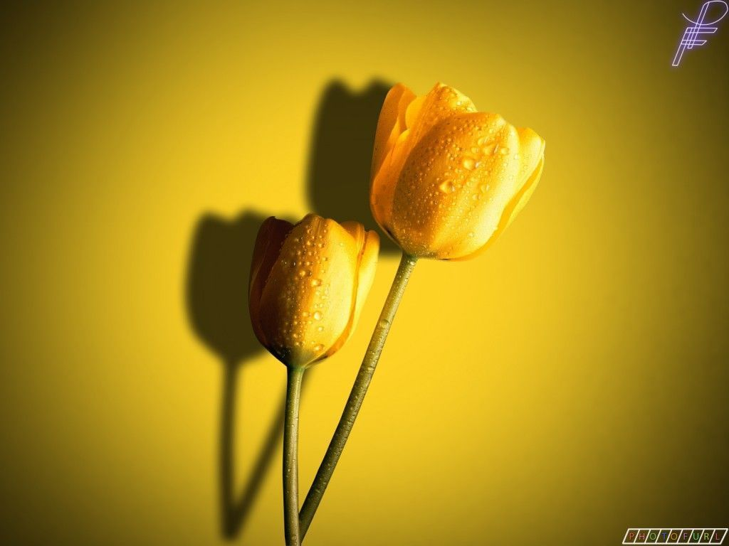 Yellow Colour Wallpaper 38 Best Hd Backgrounds Of Yellow Colour