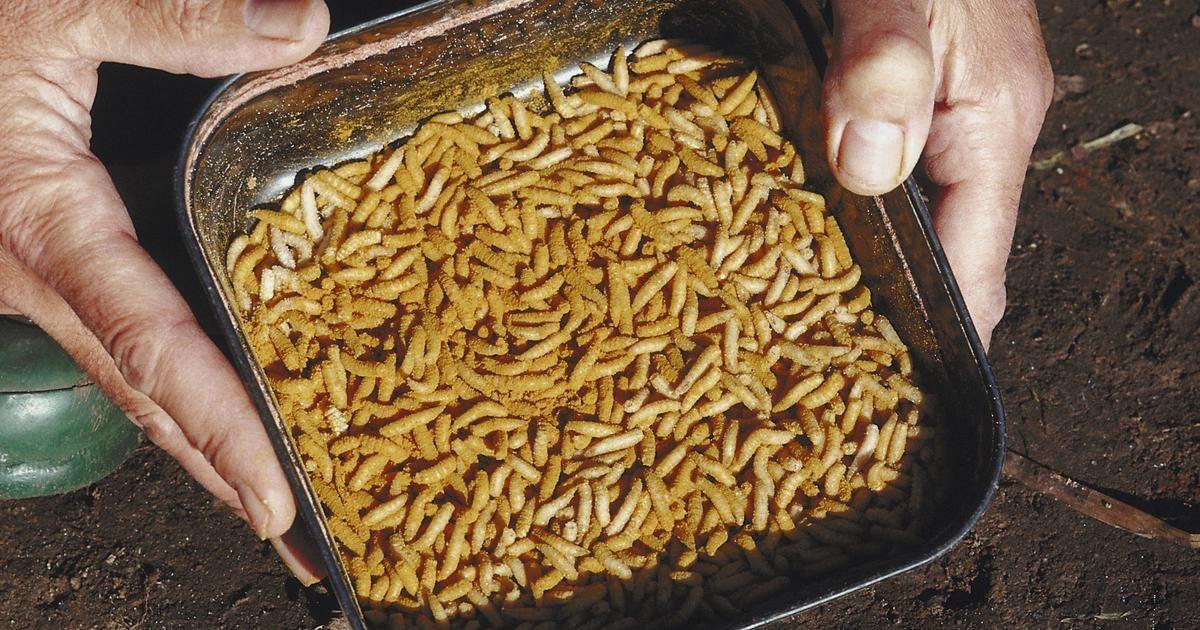 pueden los gusanos de hilo desaparecer naturalmente