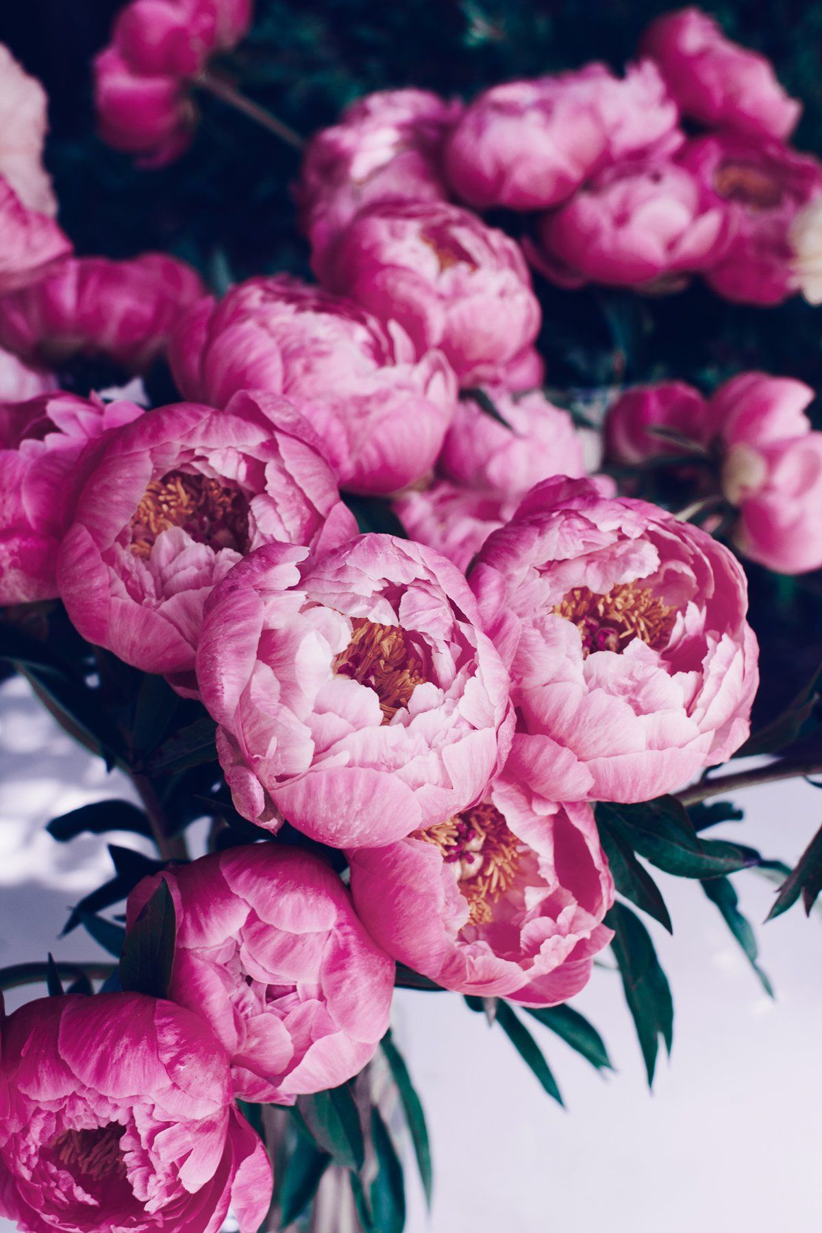 A Suite Treat Just For You Free Peony Bouquet Device Wallpaper