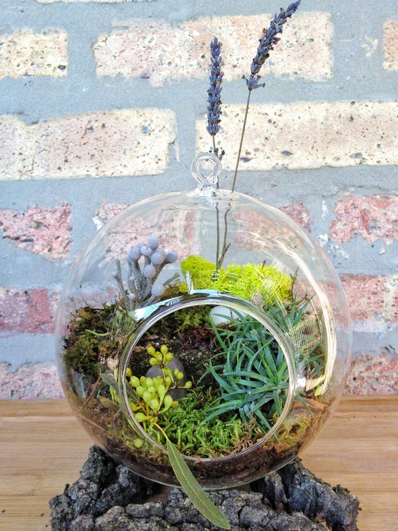 Jumbo Air Plant And Moss Terrarium A Unique Birthday Or Mothers