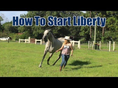 accaf997a9 How to Teach Your Horse to do LIBERTY [The first steps of liberty training]  - YouTube