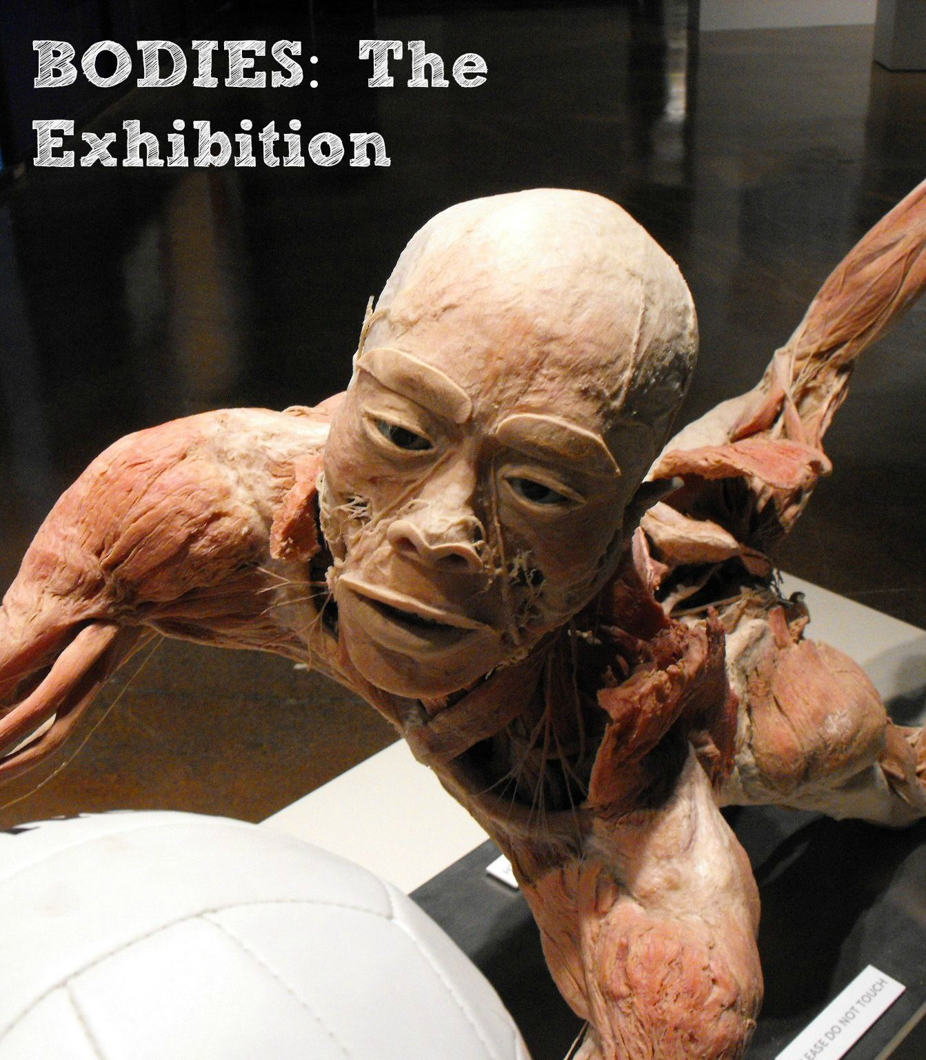 The Bodies Exhibit With Pictures Real Human Bodies Anatomy Mom