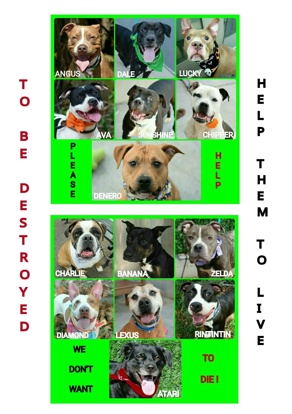 THE KILL LIST FOR SATURDAY 92416🐶🐶🐶 14 LIVES COULD END