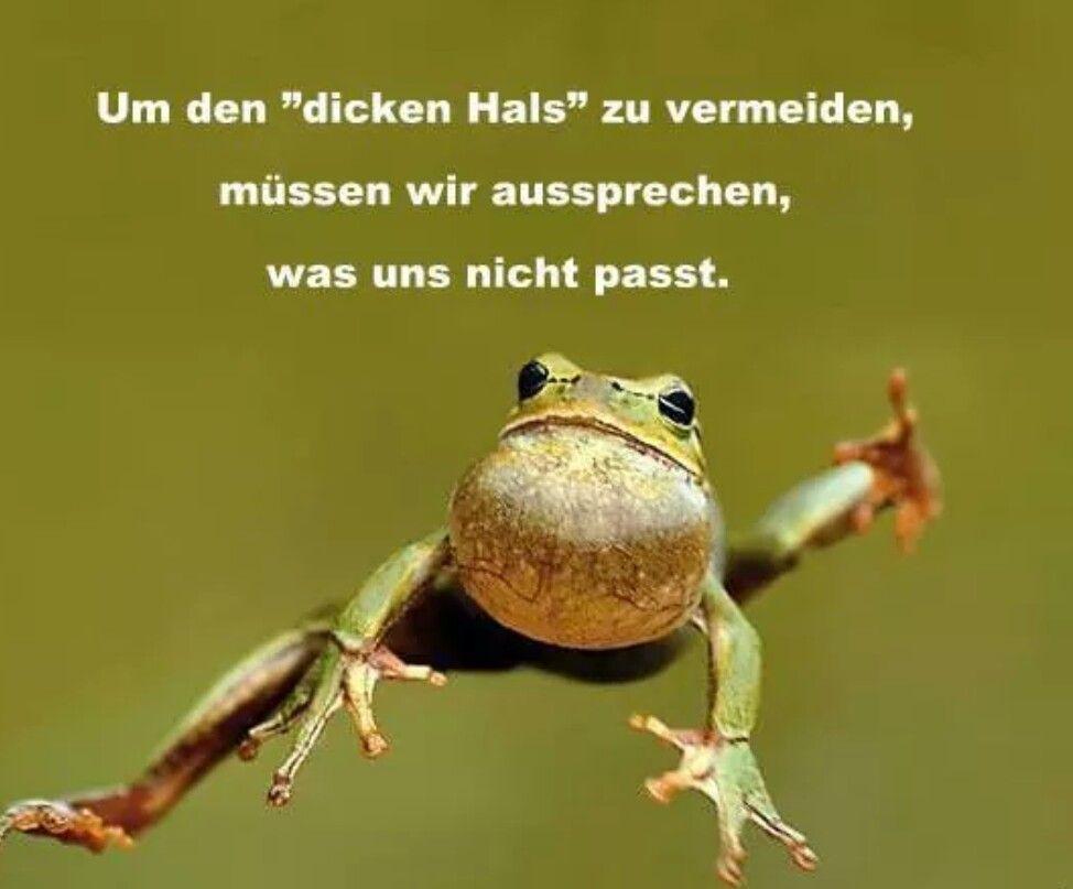 Lebensweisheit Lustige Frosch Bilder Mit Spruche