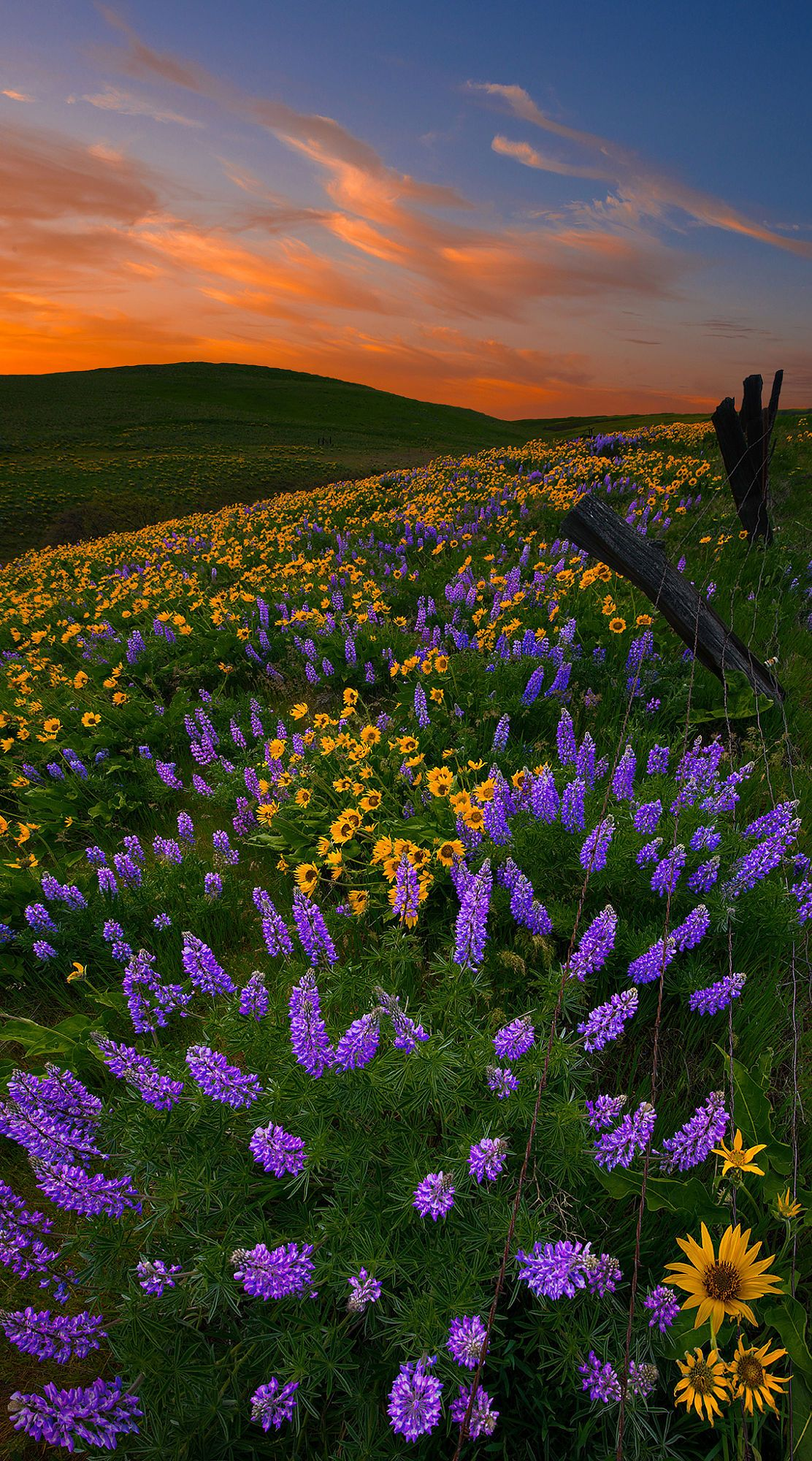 An Earth Day Nature Photography Beautiful Nature Nature Aesthetic
