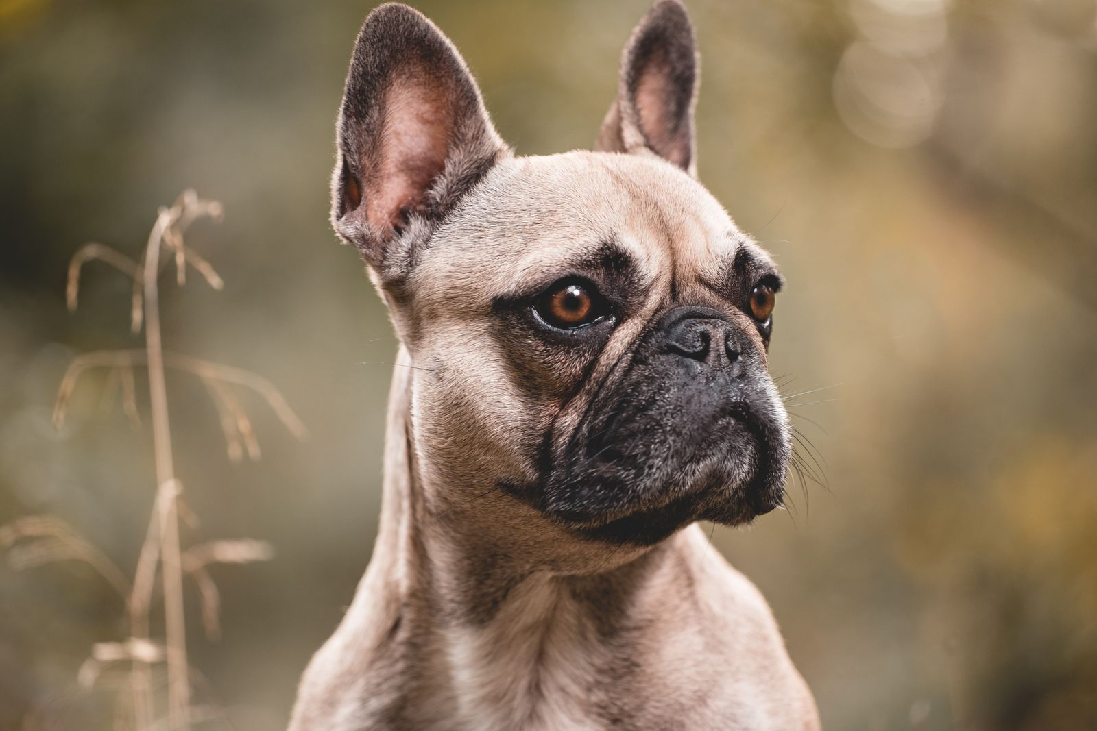 The 29 most expensive dogs to buy and own in 2020 Most