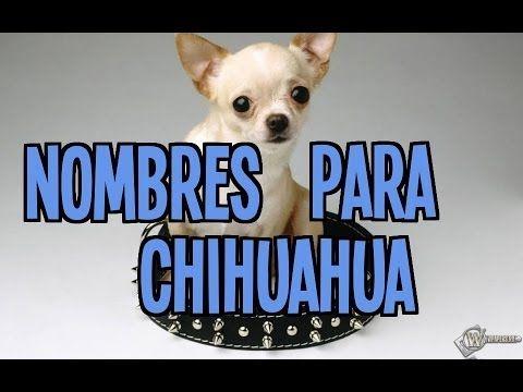 Los Mejores Nombres Para Perros Chihuahua Macho Y Hembra Youtube Novelty Sign Novelty