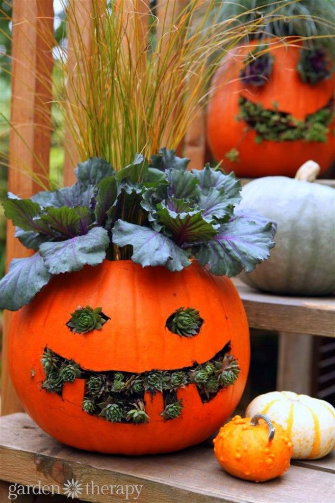 Jack o Planterns Plants, Holidays and Gardens - halloween pumpkin decorations