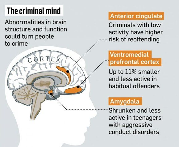 Science Maps The Antisocial Brain The Criminal Mind May Really