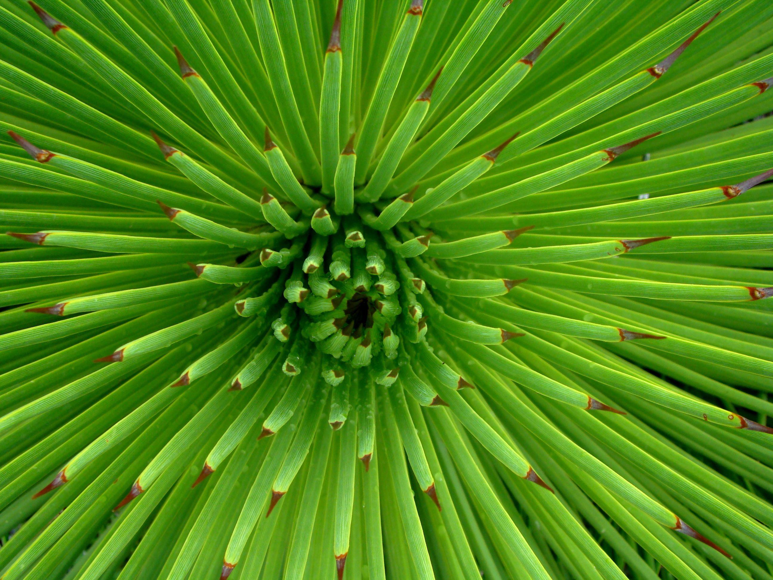 Great green flower