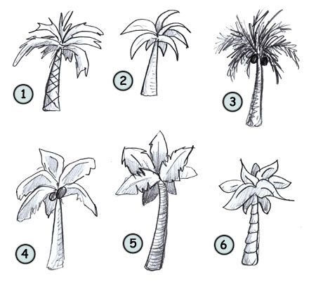 How To Draw Palm Trees Palm Tree Drawing Tree Drawing Tree Doodle