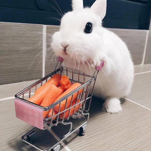 Little Rabbit Goes To The Supermarket Funny Pet Videos